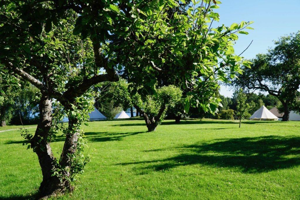 Glamping torbjørnrud garden review
