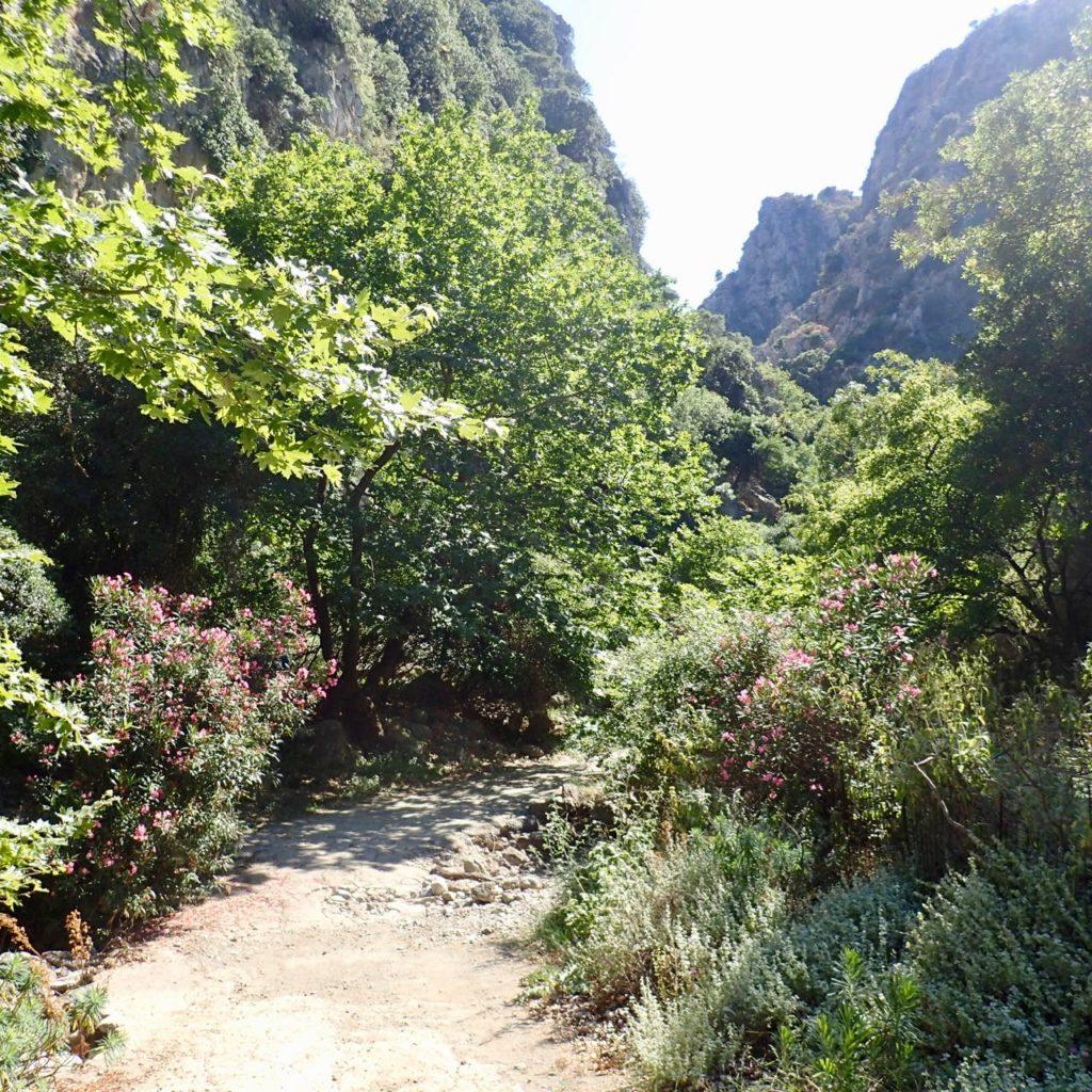 Deliana gorge flowers