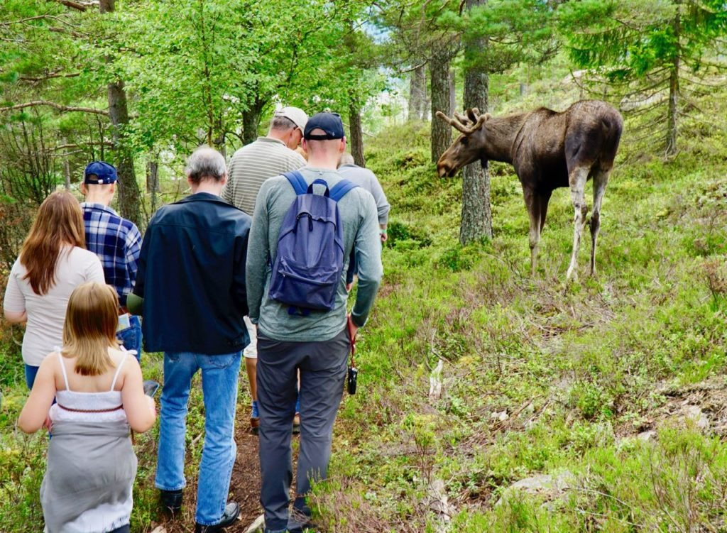Elgtun elk close guided tour review