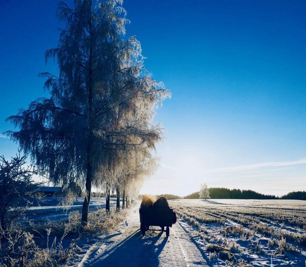 Rollstad farm christmas tree self cut frosty winter norway horse