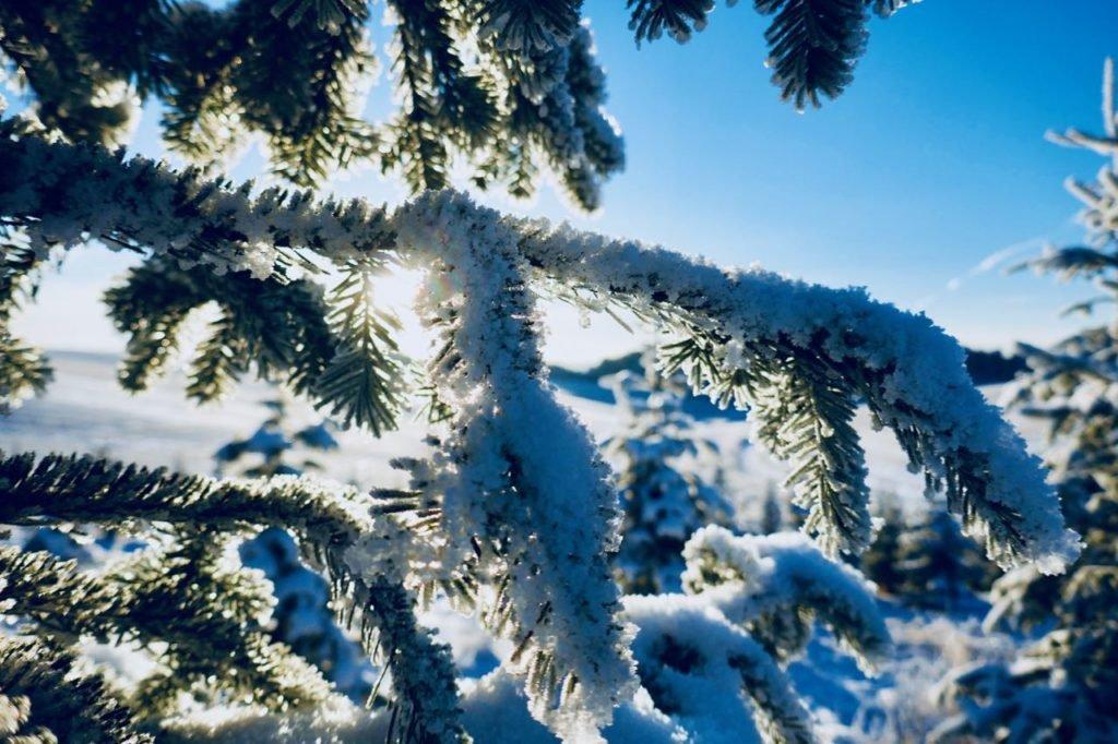 Rollstad Farm christmas tree self cut field sunshine