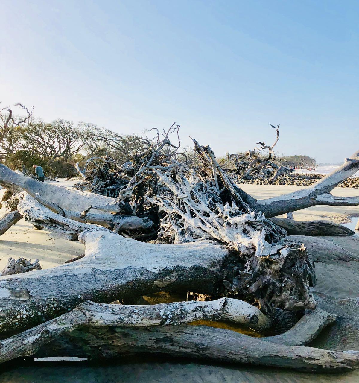Jekyll island Driftwood beach bike trip