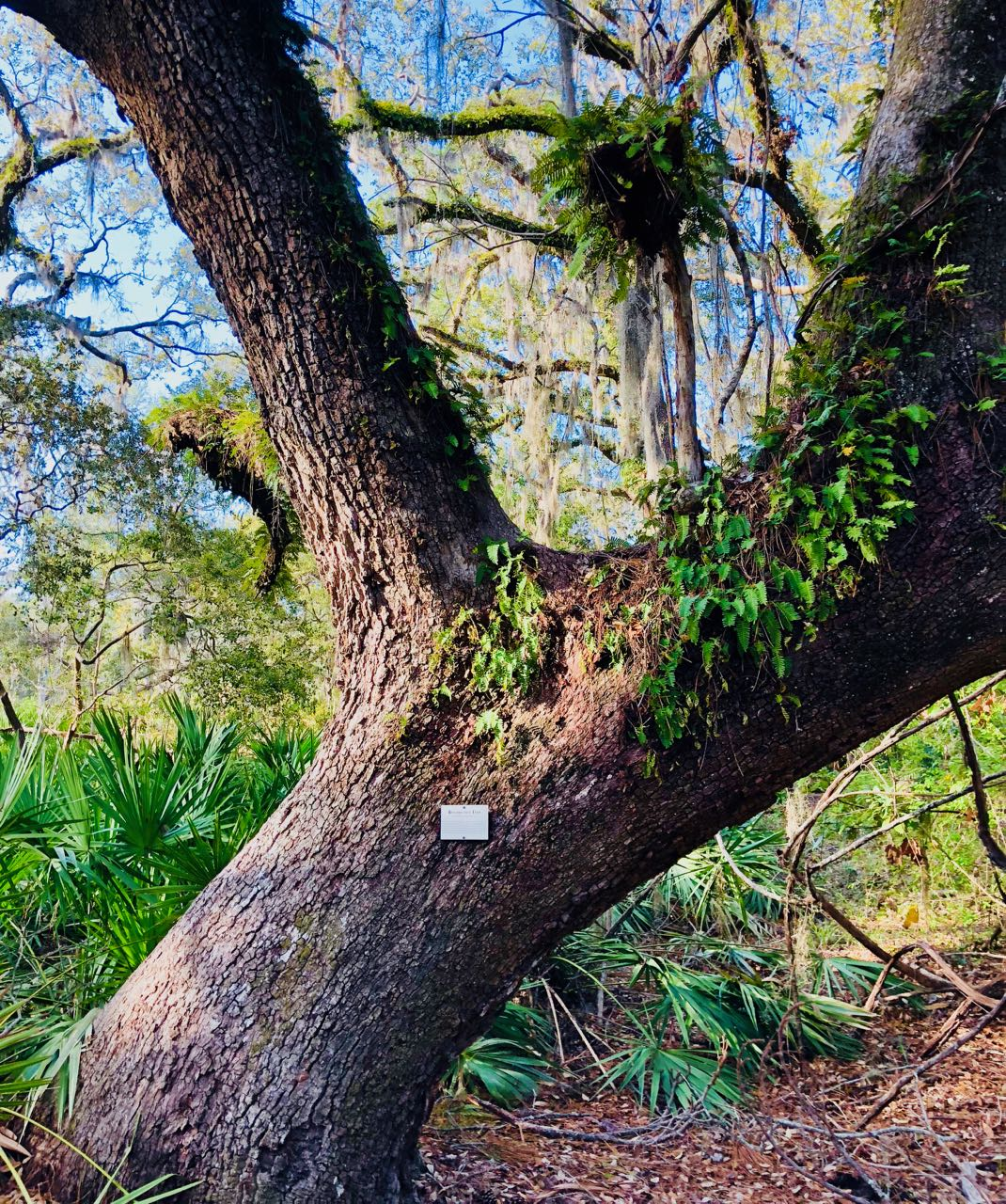 Jekyll island Tupelo trail tree path bike trip