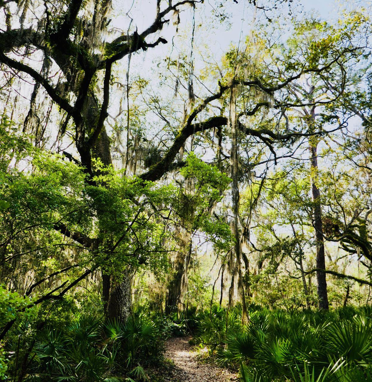 Jekyll island Tupelo trail sti sykkel tur