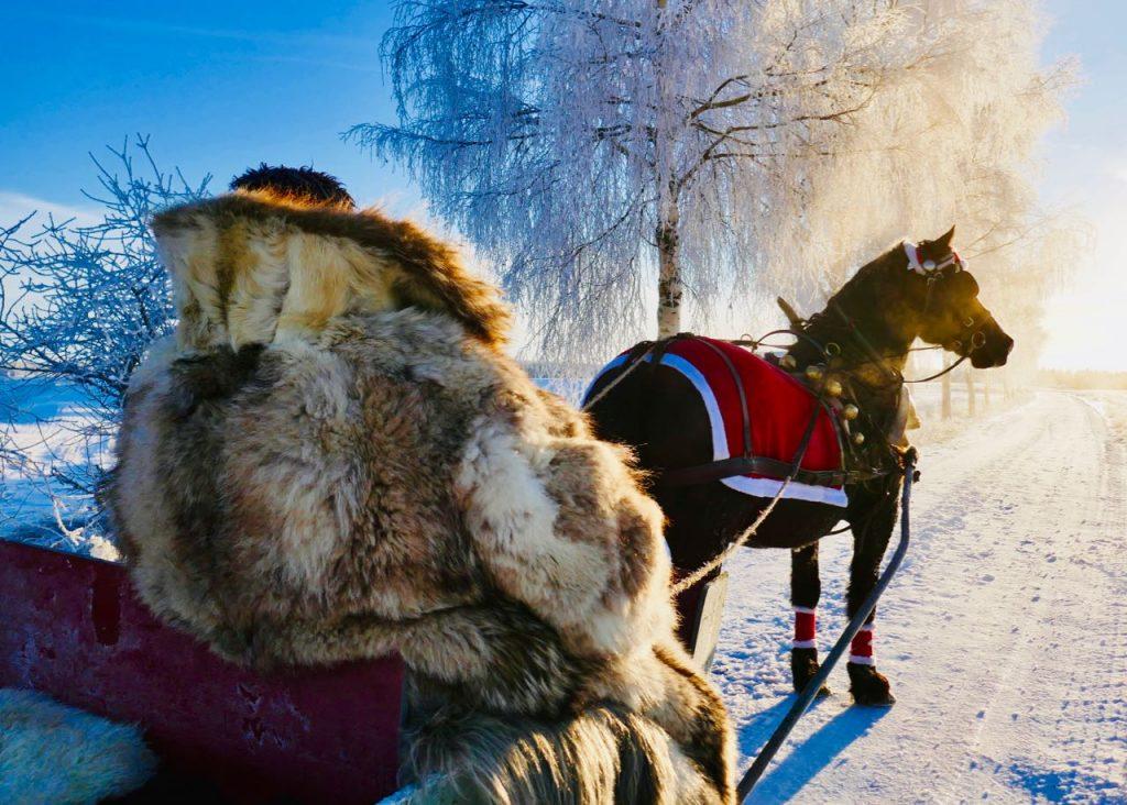 Rollstad Farm christmas tree self cut horse sleigh carriage