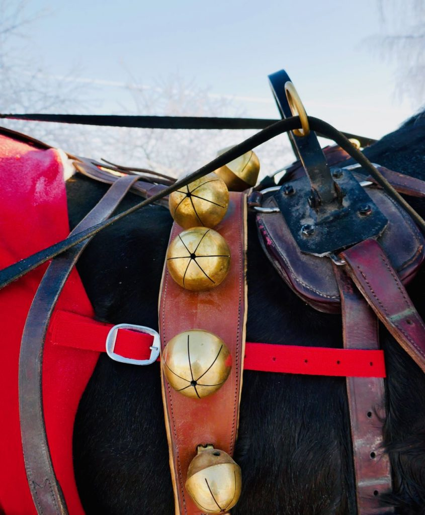 Rollstad farm christmas tree horse ride sleigh bells