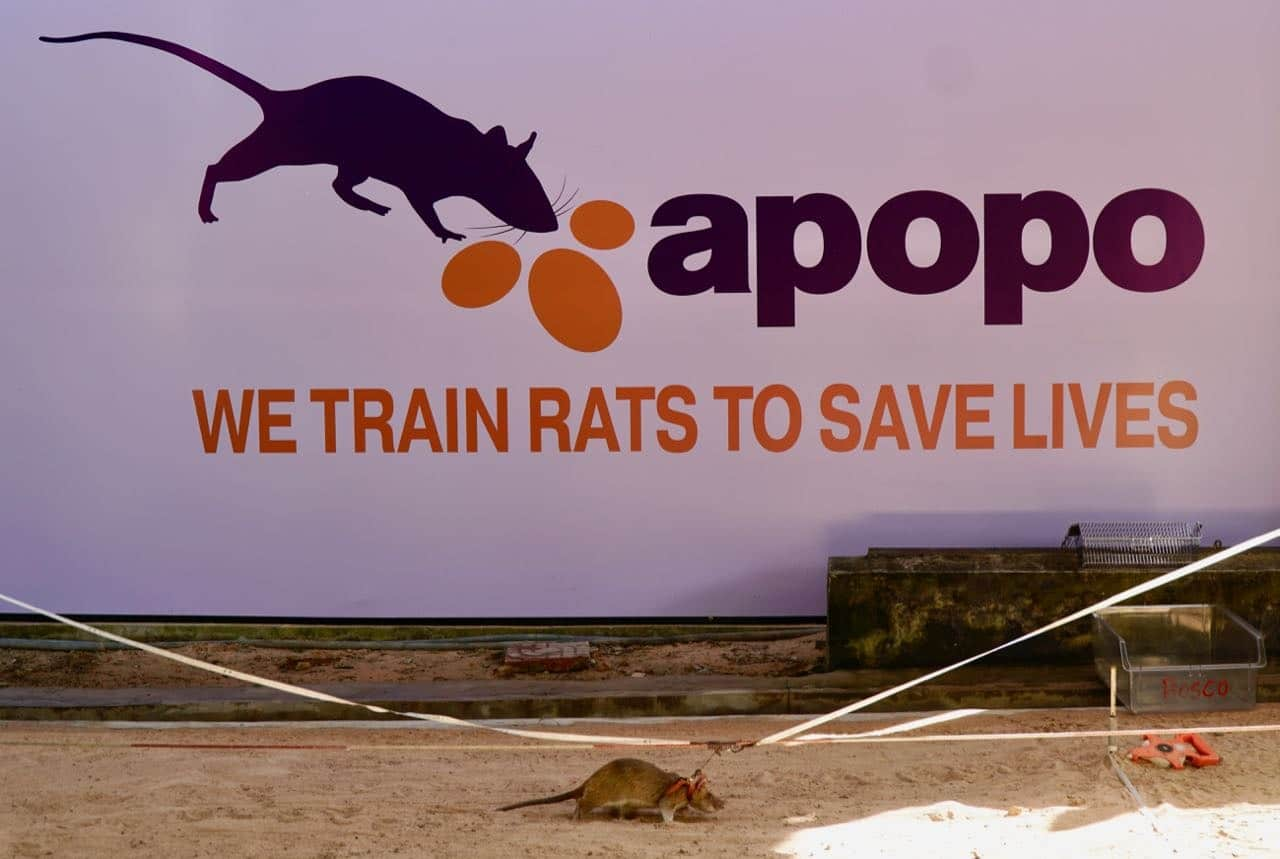 APOPO Visitor Center HeroRats review