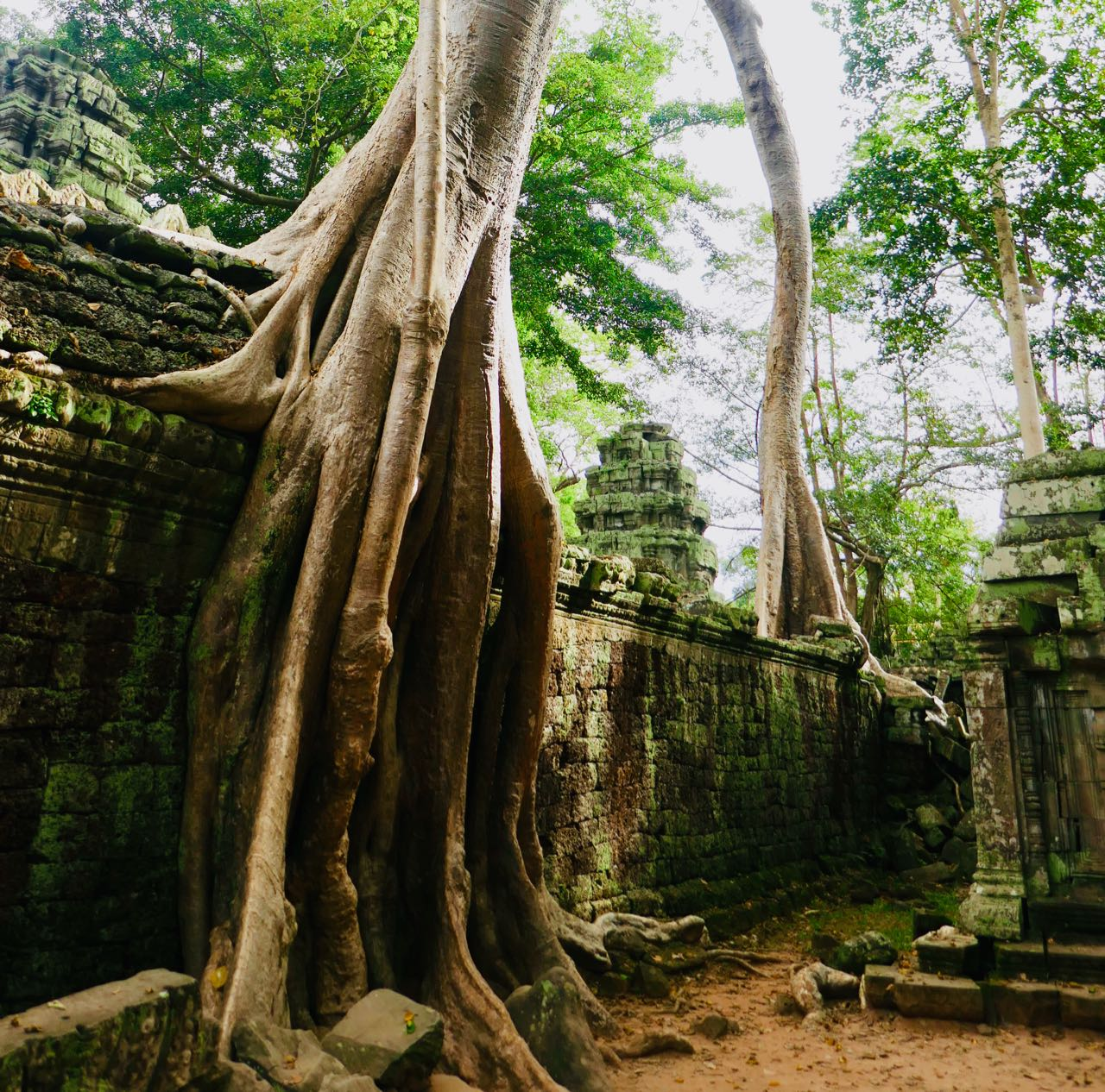 Ta Promh Temple tree walls Angkor Kambodsja Siem Reap review