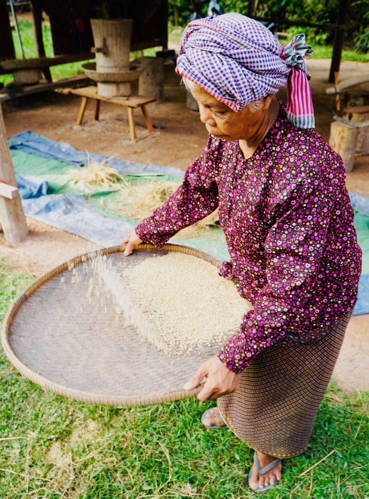 An Unforgettable Ox Cart Adventure Siem Reap rice making Cambodia