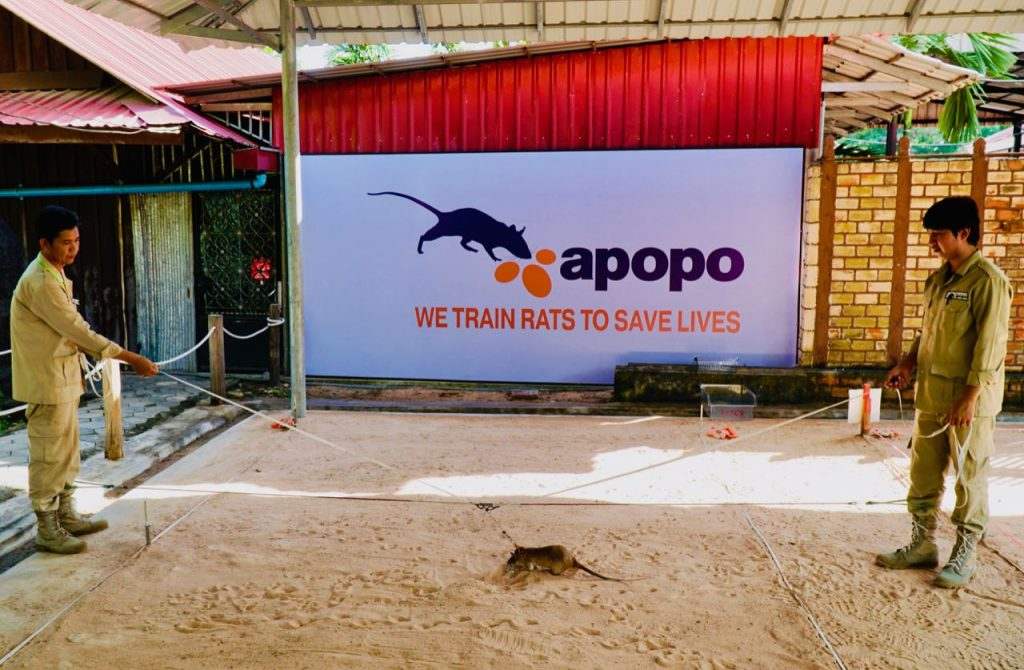 Apopo Visitor Centre Contributing to local communities in Siem Reap