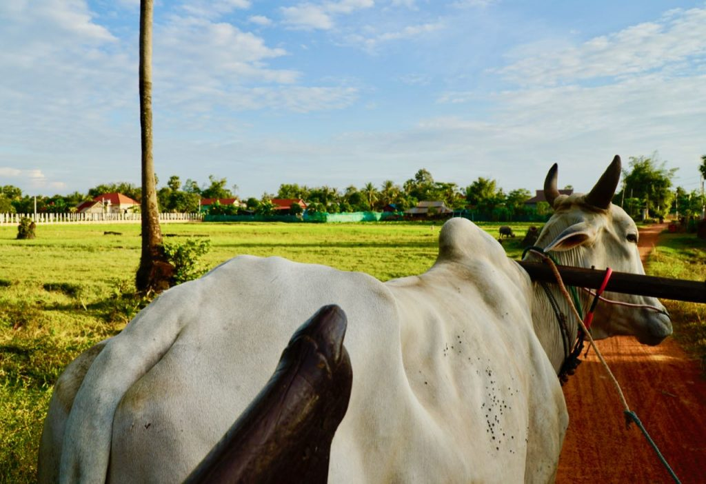 Ox Cart Adventure Tours Contributing to local communities in Siem Reap