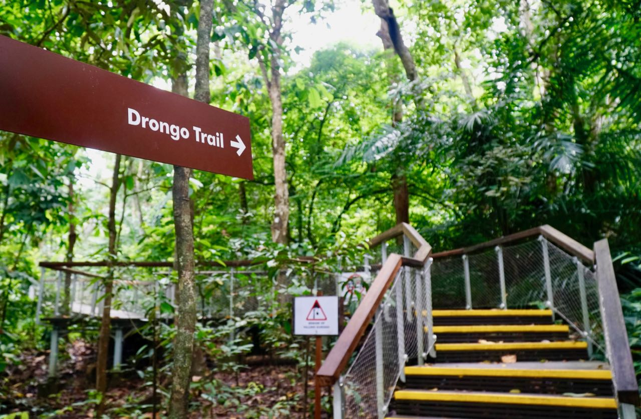 Squirrel and Drongo Trail Jungle Walking in Singapore MacRitchie Reservoir Windsor Nature Park
