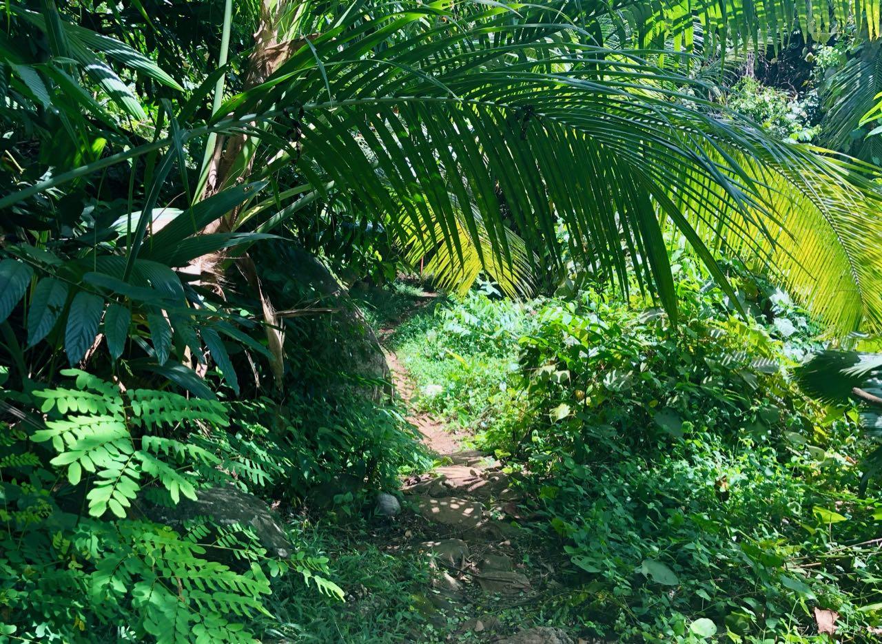 Jungle walk Hilton Seychelles Labriz Silhouette Island