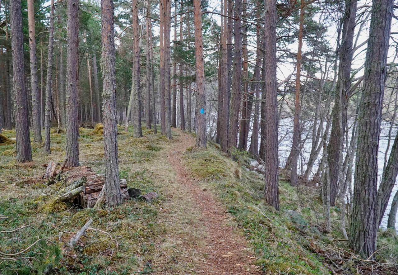 Trail along the river. Elk safari on ebikes in Dovre