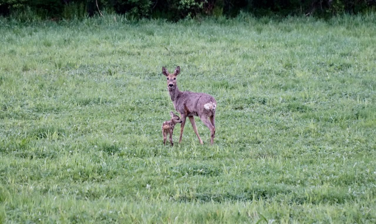 Red deers. Elk safari on ebikes