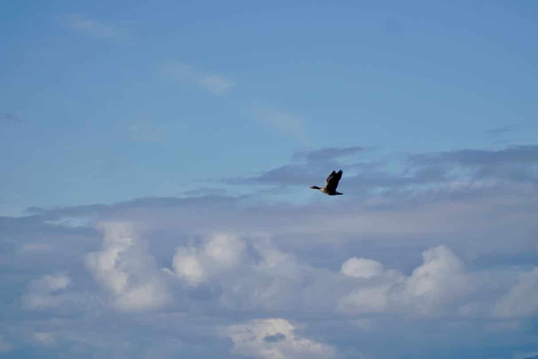 Bird life on Vega island