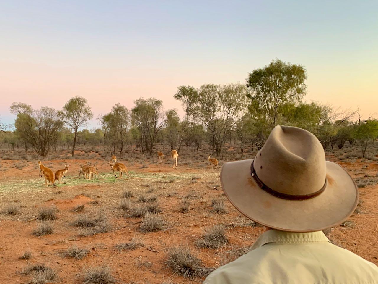 Kangaroo Sanctuary Sunset Tour Brolga Kangaroo Dundee