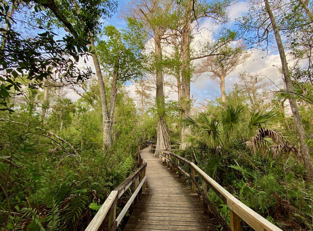 Big Cypress Bend Boardwalk 17 steder å stoppe langs Tamiami Trail/ U.S Highway 41