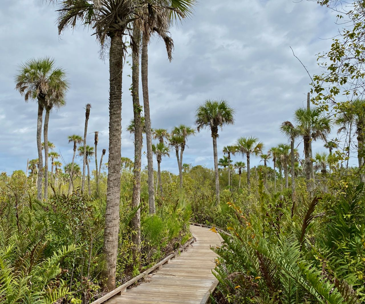 Collier Seminole State Park Attractions and Places to Stop Along the Tamiami Trail/U.S. Highway 41