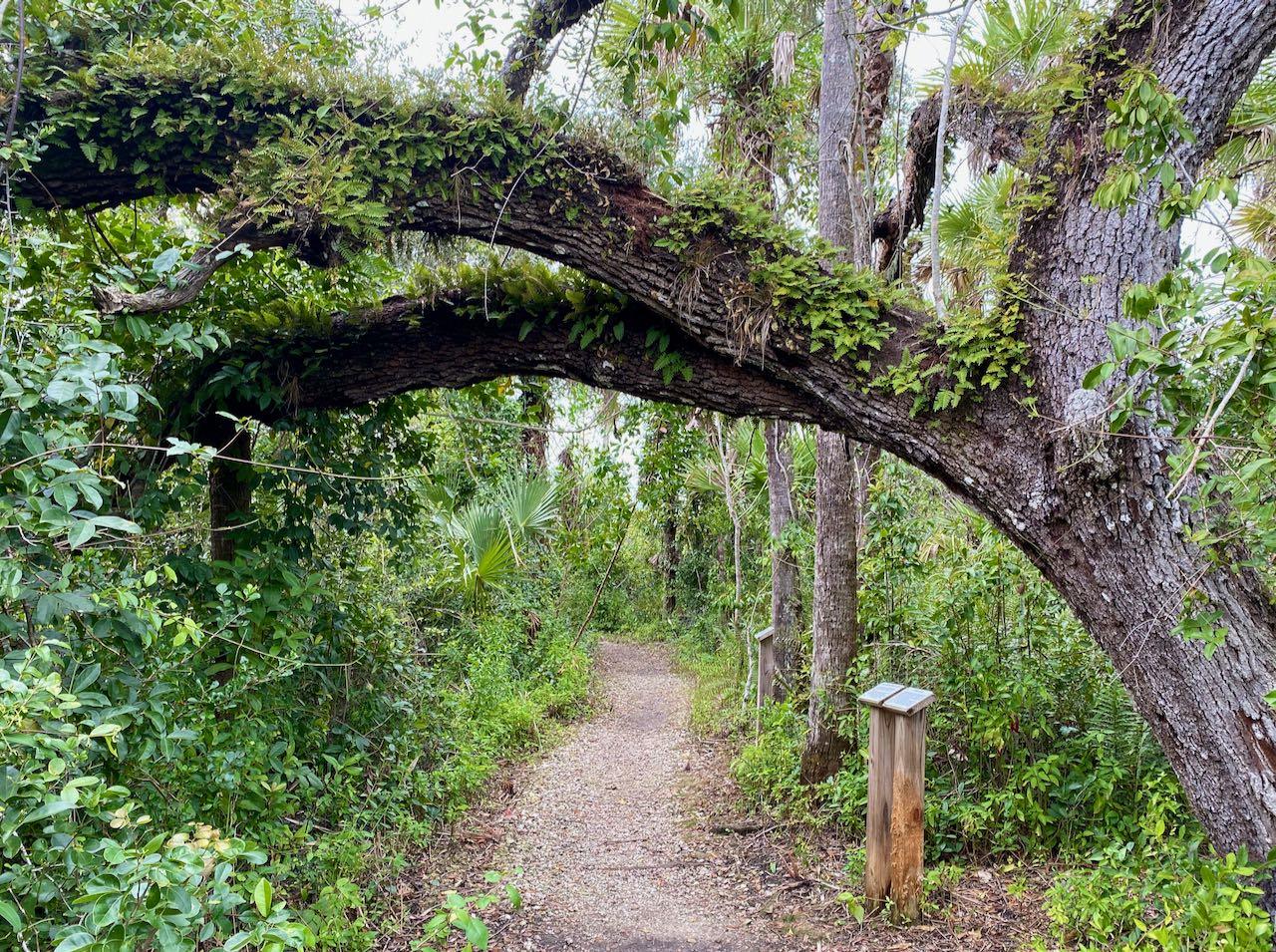 Collier Seminole State Park 17 steder å stoppe langs Tamiami Trail/ U.S Highway 41
