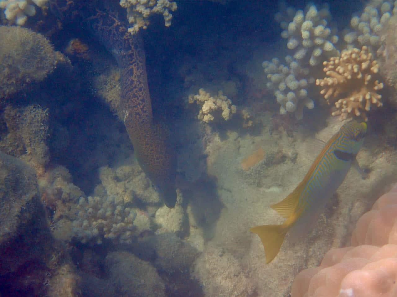 Cairns Road Trip Reef Sprinter Snorkeling Great Barrier Reef
